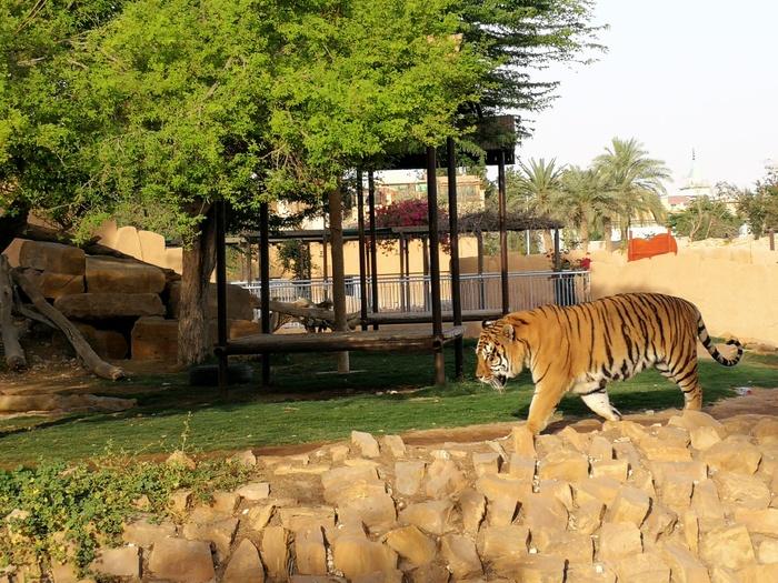 حديقة حيوان الرياض